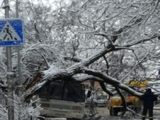 Сгнившая акация рухнула на автобус в Пятигорске