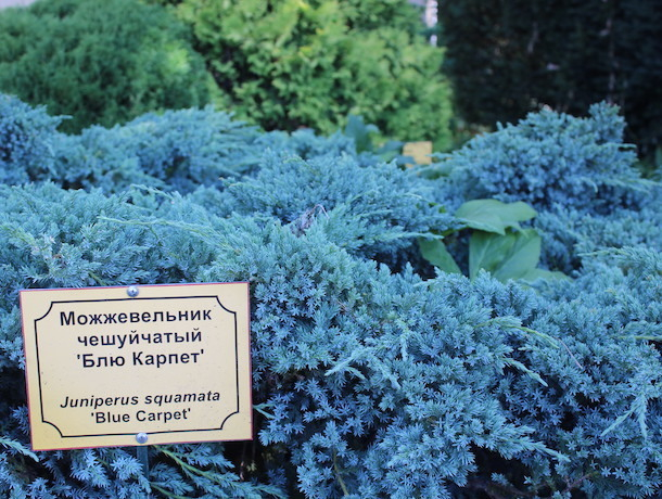 «Любимчиков нет, я же не могу обидеть растение», — директор ставропольского ботсада о своих зеленых «детях»