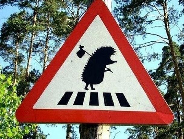 Новые дорожные знаки появятся на дорогах Ставрополья