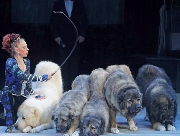Грандиозное новогоднее шоу Марицы и Дана Запашных стартует с 23 декабря в Ставропольском цирке