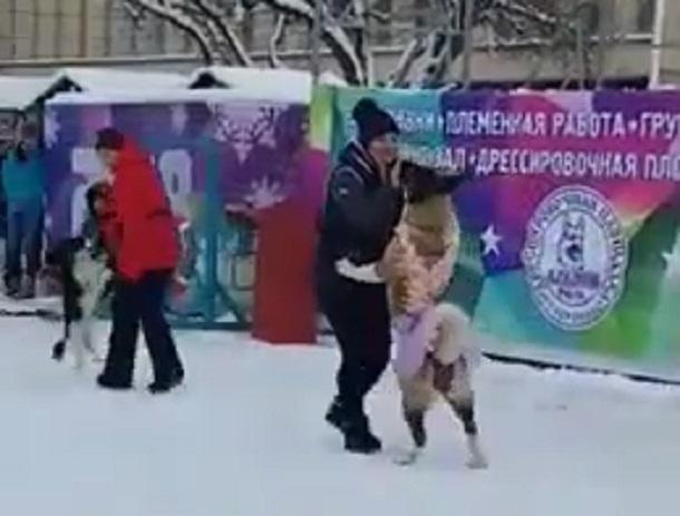 Бальные танцы станцевали собаки в центре Ставрополя и попали на видео