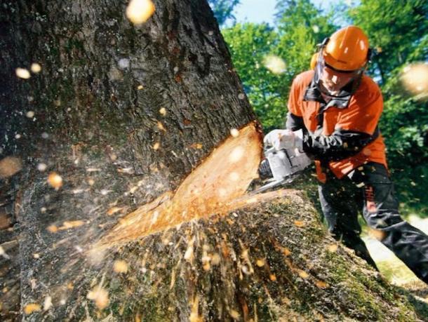 «Зеленый щит» не смог спасти лесополосу в Ставрополе