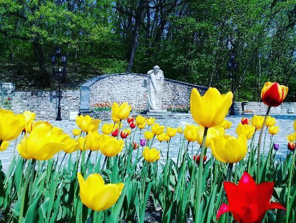Количество туристов в Железноводске увеличилось на 61%