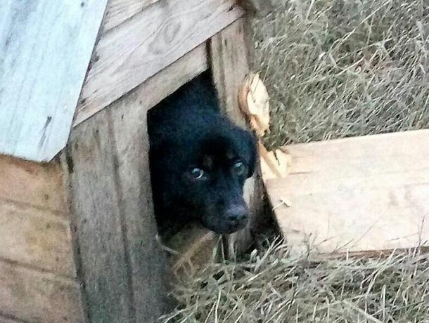 Неизвестный живодер заколотил собаку в будке и вывез за город на Ставрополье
