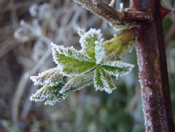 С заморозков начнется утро воскресенья в Ставрополе