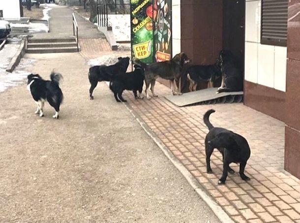 Стаи бродячих собак нападают на жителей Кисловодска, - очевидцы