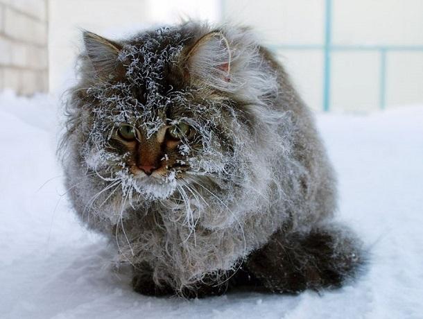 Лютый холод и обильный снегопад ждут ставропольцев во вторник