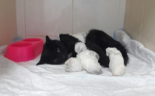 Кошку со страшными ожогами четырех лап нашли подростки в Ставрополе