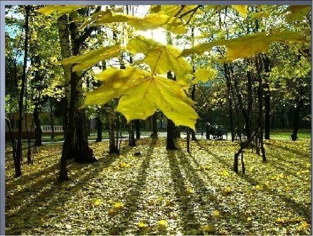 Заметное потепление ожидается на Ставрополье в конце рабочей недели