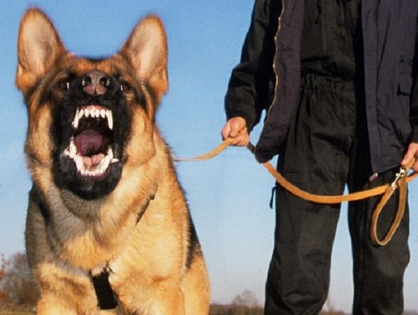 Работников администрации погнали собаками хозяева самостроя в Железноводске