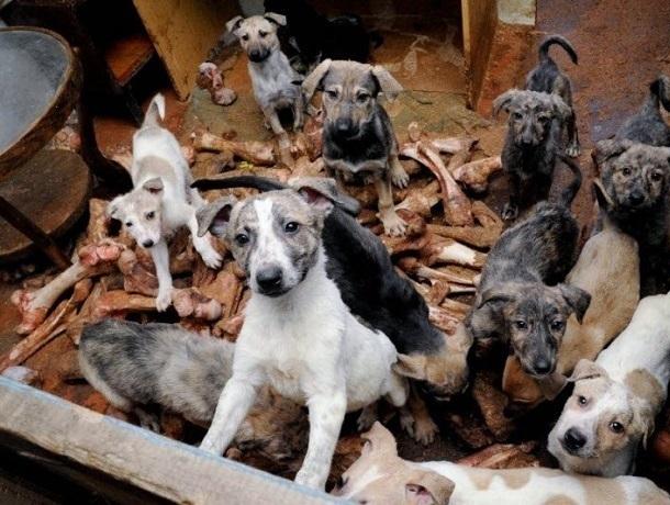 Жуткая вонь и лай стаи собак из квартиры ставропольчанки мешают жить соседям