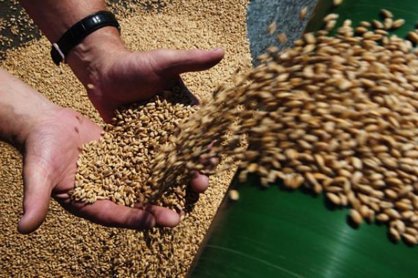 В Ставропольском крае выросла урожайность сельхозкультур