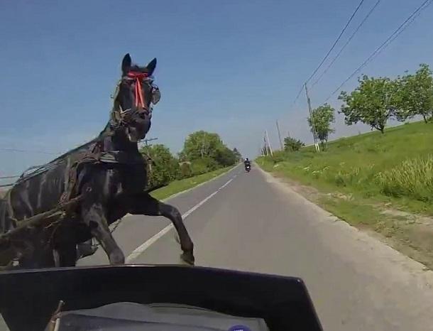 ВЛевокумском районе Ставрополья автомобилист сбил лошадь