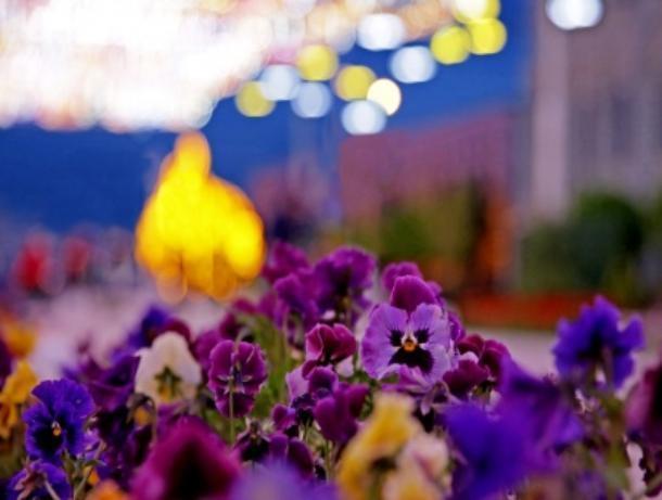 В столице Ставрополья высадят 60 тысяч новых цветов