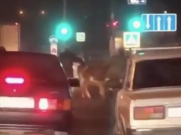 Странные манипуляции двух мужчин с коровой посреди дороги попали на видео в Пятигорске