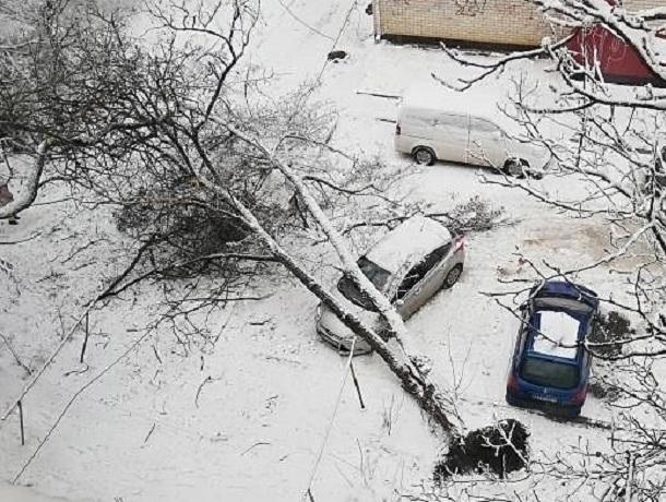 «Опять деревопад»: огромных размеров растение упало на автомобиль в Ставрополе