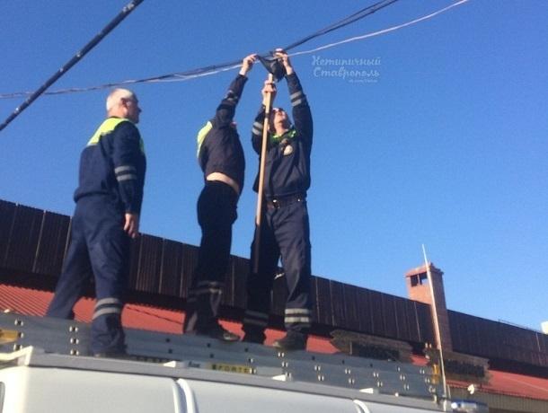 «Спасти рядового голубя»: трое спасателей вызволяли застрявшую в проводах птицу в Ставрополе
