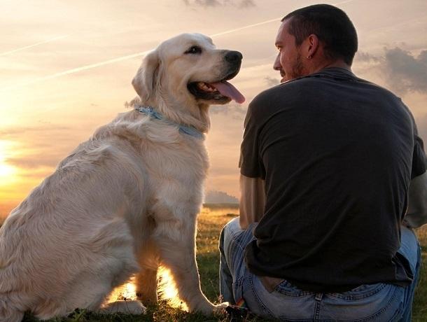 «Недешевое удовольствие»: стало известно, сколько стоит завести собаку в Ставрополе