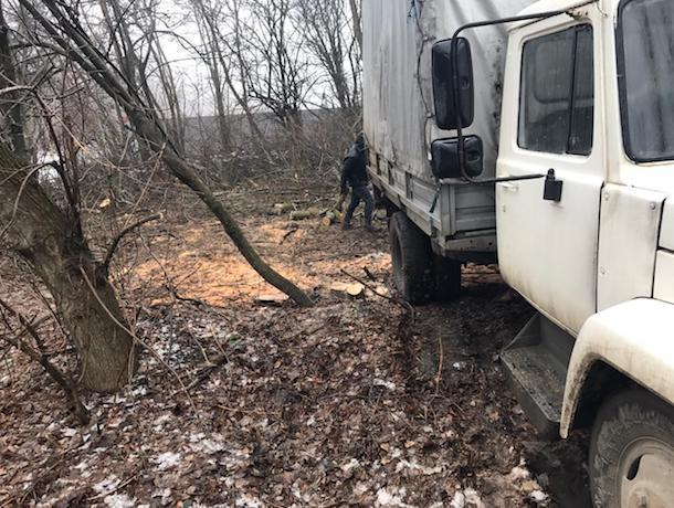 Вырубку деревьев на юге остановили жители Ставрополя