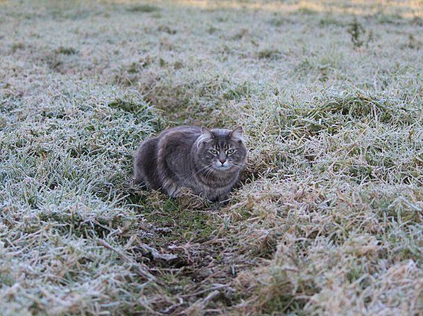 Заморозки ожидаются вночь навоскресенье наСтаврополье