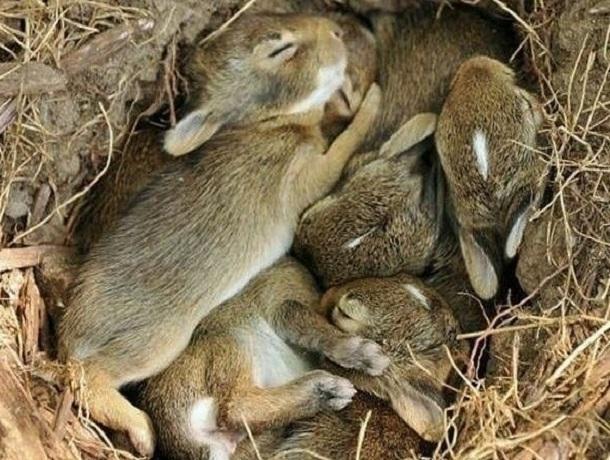 «Не жгите траву, там зайчата!»: ставропольцы получают вирусные сообщения с трогательными фото