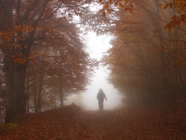 Туманный и прохладный день ждет ставропольцев в субботу