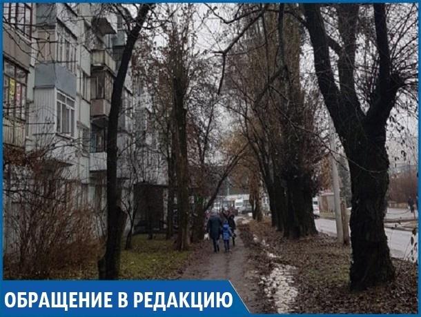 «Ветки падают на тротуар рядом со школой, а ведь там ходят дети», - жительница Ставрополя