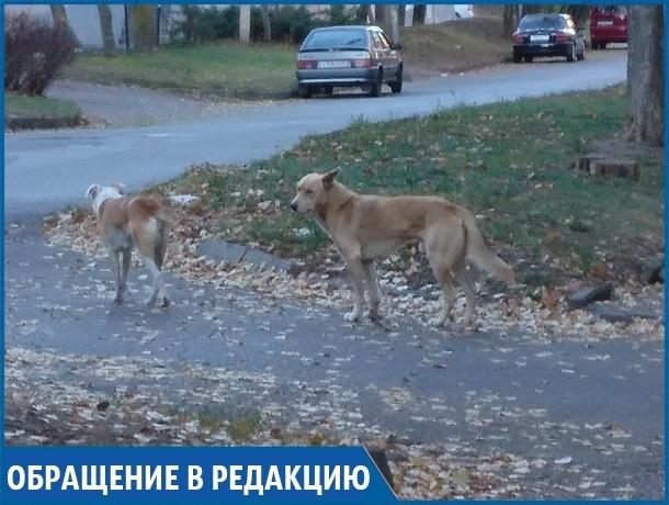 «Три года бездомные собаки нападают на людей и не дают нам спать по ночам», - жительница Кисловодска