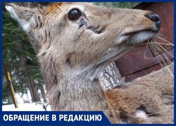 Заживо гниющий оленёнок погибает в заповеднике Карачаево-Черкессии