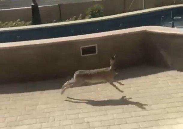 В Ставрополе по улицам бегает заяц