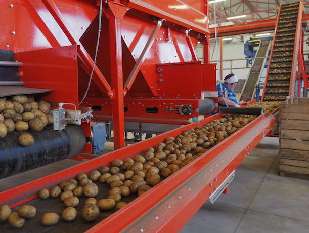 «Картошка точно местная»: импортозамещение на Ставрополье