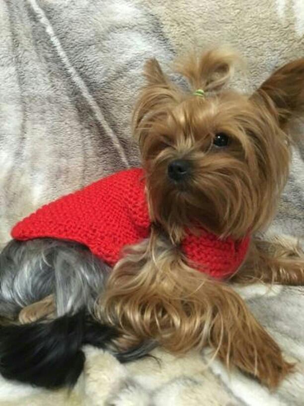 На юге Ставрополя пропала собака