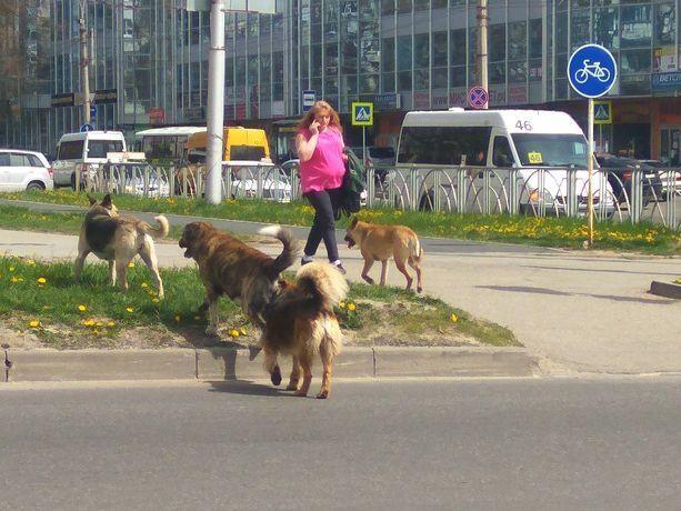 Бродячие собаки терроризируют жителей улицы в центре Ставрополя