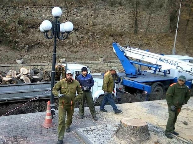 «Сказали, чтобы вообще ничего не росло», — в Кисловодске продолжается уничтожение деревьев