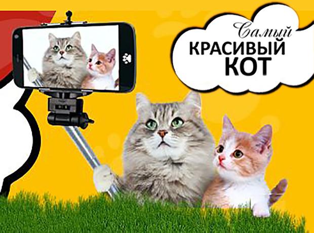 «Блокнот Ставрополь» объявляет фотоконкурс «Самый красивый кот 2018»