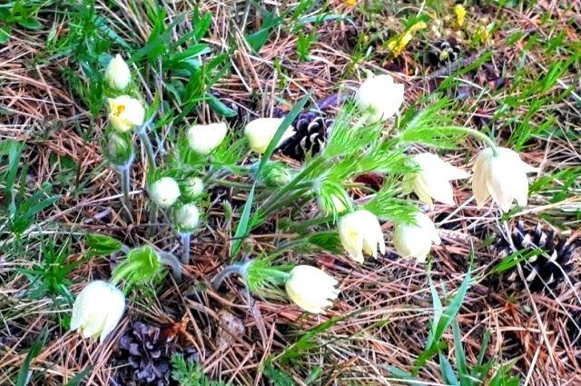 На Ставрополье внезапно пришла весна