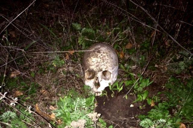 Череп икости нашли около частного дома наСтаврополье