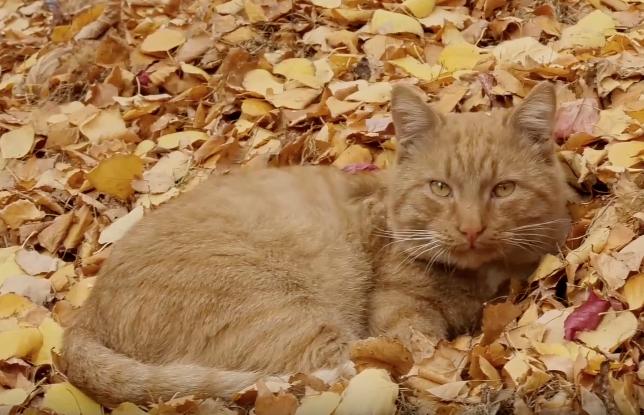 Как девушка смогла спасти своего кота в два клика мышкой