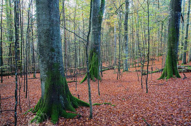 Судьбу пятигорского леса решали в суде
