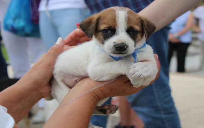 В Кисловодске 30 бездомных животных нашли свой дом