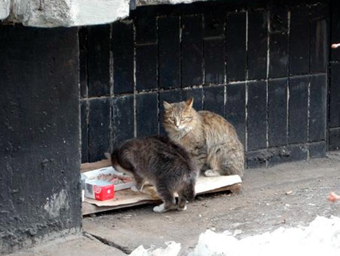 Городские власти не оставили четвероногих друзей в беде в Ставрополе