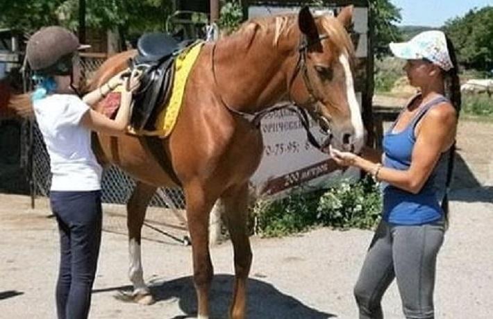 «Недосмотрели»: 5 лошадей пропало в конном клубе Ессентуков
