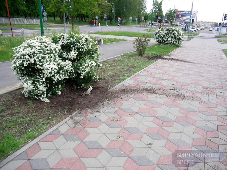 На Ставрополье воришка позарился на декоративные кустарники
