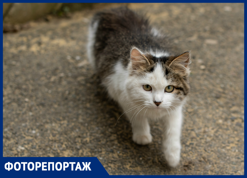Как живется бездомным питомцам в Ставрополе