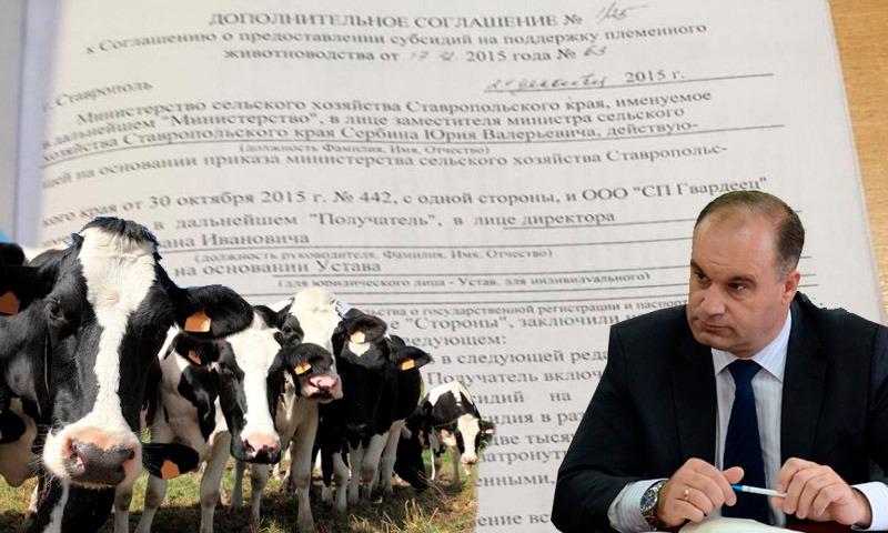 Ставропольские рога и копыта: бизнесмены продали себе своих же коров и получили субсидию 22 млн руб