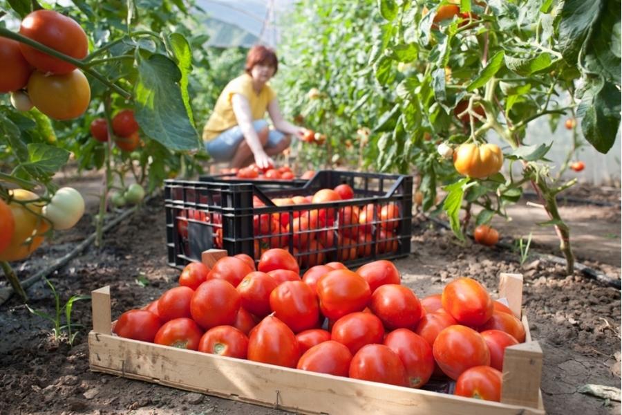 До миллиарда долларов хотят нарастить экспорт продуктов АПК на Ставрополье
