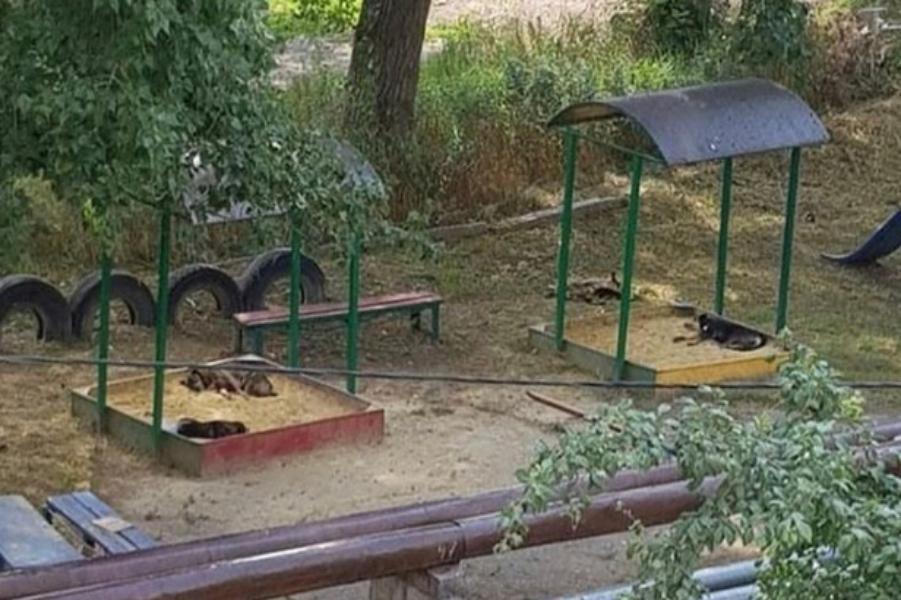 Бездомные собаки в песочнице испугали жителей Ставрополя