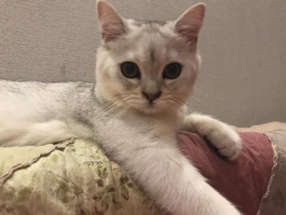 Ставропольские коты принимают участие в конкурсе «Мартовский кот»
