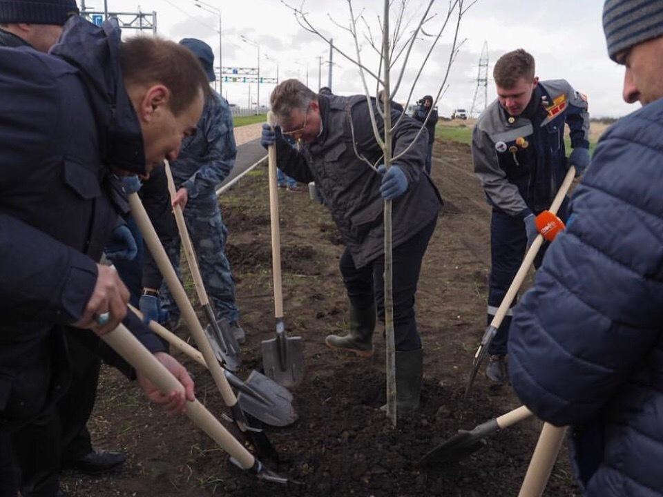В Ставрополе появилось 55 новых деревьев и 140 кустарников