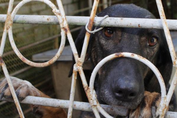 Спасение собак из концлагеря для животных организовали волонтеры Ставрополя